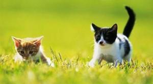 Ešte prednedávnom bola mačka neodmysliteľnou súčasťou každého vidieckeho  domu. S rozvojom civilizácie je ale tohto vidieckeho prostredia čoraz menej  ... 29b745bf948